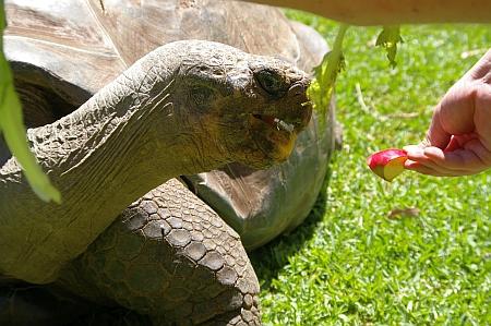 giant-tortoise-01