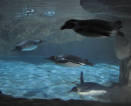 Penguin display. Picture by Hapsis.