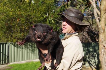 A park ranger gives a talk on the Tasmanian devil (Sarcophilus harrisii)